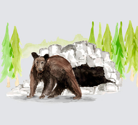 A Bear's-Eye View of Yellowstone by Hello Monday Wins SOTM for May