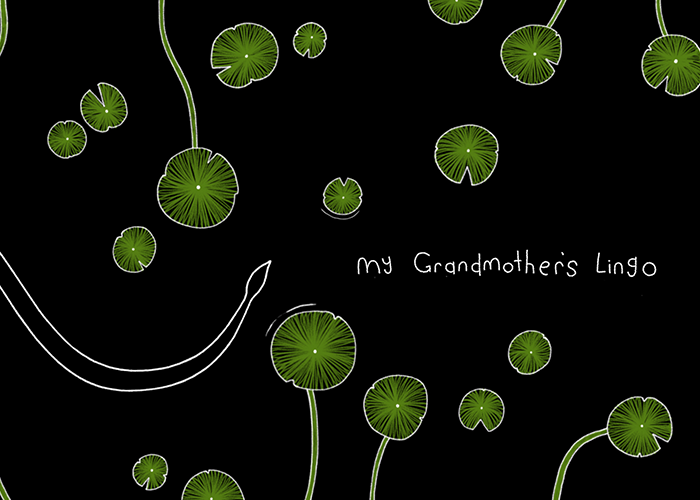 Awwwards website of the day: My Grandmother's Lingo